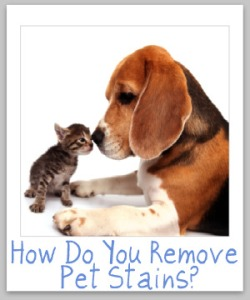 remove-pet-stain